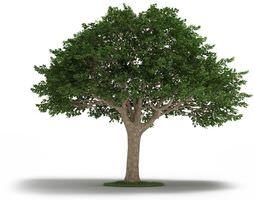 Tree Neem Tree 3D