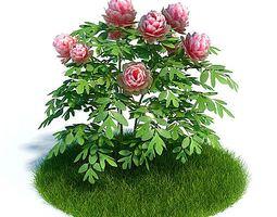 pink garden  roses 3d model