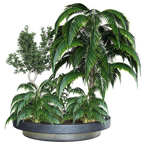 Outdoor Plant  Vol 04