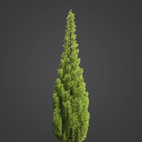 2021 PBR Eastern Aborvitae Collection - Thuja Occidentalis