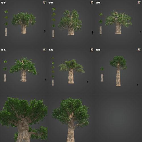 2021 PBR Baobab Collection - Adansonia Digitata