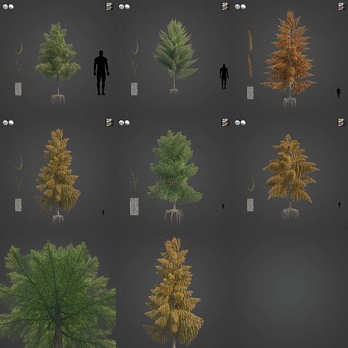 2021 PBR Bald Cypress Collection - Taxodium Distichum