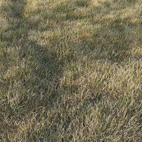 Grass Collection 6
