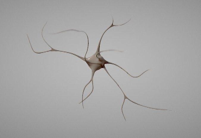 Nerve Neuron cells