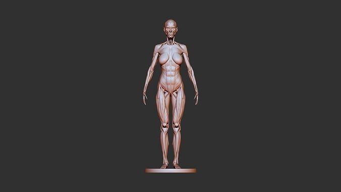 female anatomy 3d print