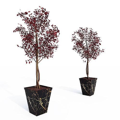 Decorative sapling