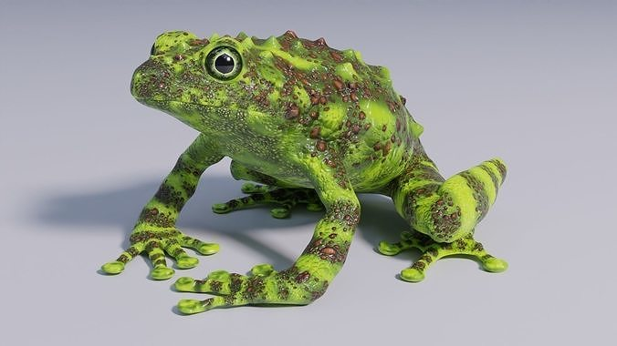 Vietnamese Mossy Frog - Animated