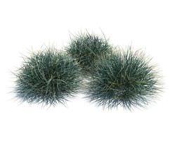 Green Growing Grass 3D model