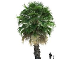Palm Tree green 3D model