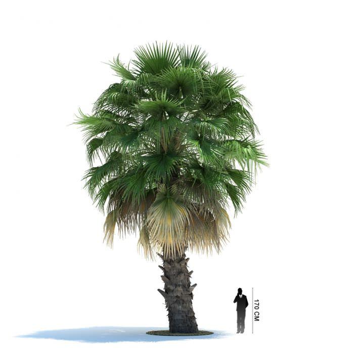 Palm Tree | 3D model
