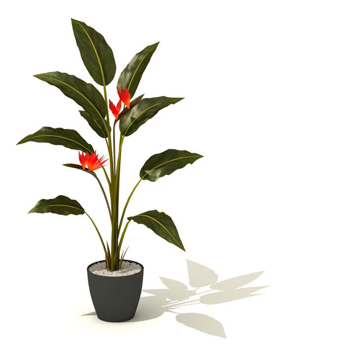 Great Potted Green Tall Plant With Red Flowers 3d Model 1