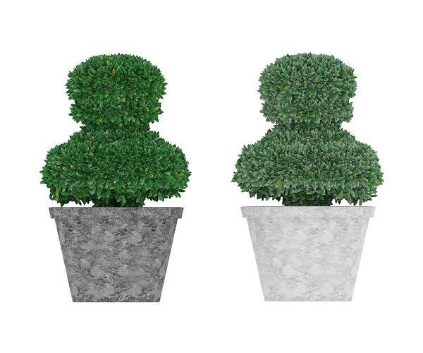 Boxwood in pawn form