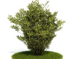 3d model medium plant shrub