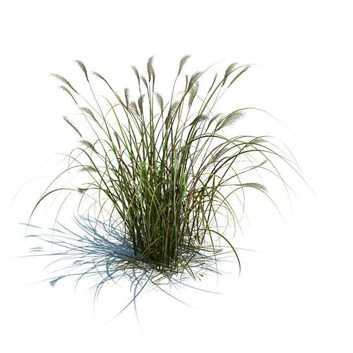 high green grass 3d model obj 1