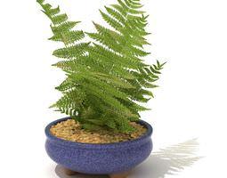 medium sized potted fern 3d model