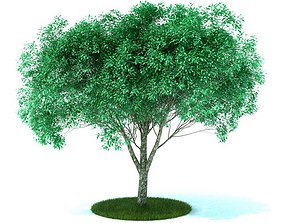 Green Leafed Tree 3D model