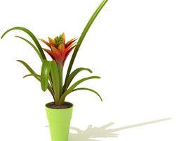 3D Single Bloom Bromeliad Plant