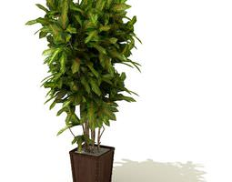 3d model tall green leafy plant in a brown square pot