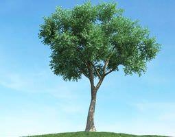 green leafy tree 3d model