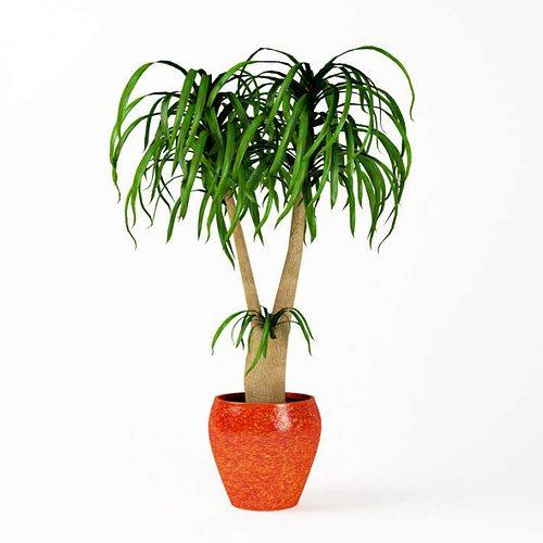 plant  indoor potted plant 3d model obj mtl 1