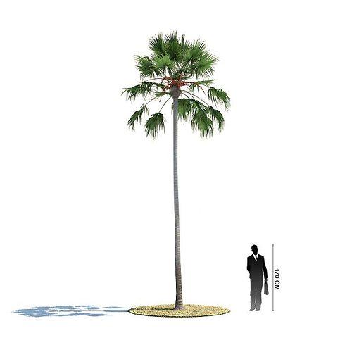 tall palm tree 3d model obj mtl 1