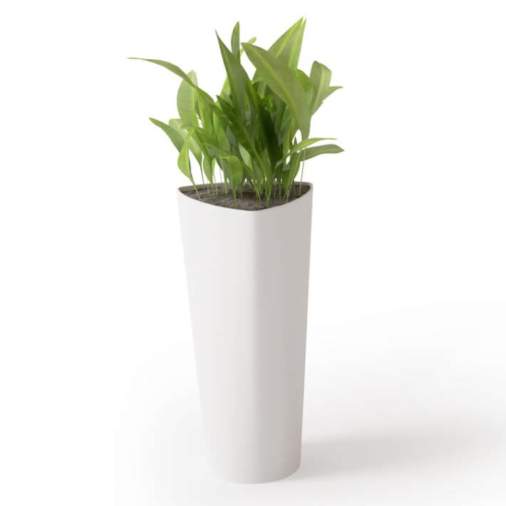 Potted Plant In Tall White Vase 3D model | CGTrader on house plants in containers, tropical plants in vases, house plants in kitchen, green plants in vases, aquatic plants in vases, growing plants in vases, fake plants in vases, water plants in vases,
