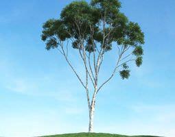 outdoors Green Leafy Tree 3D model