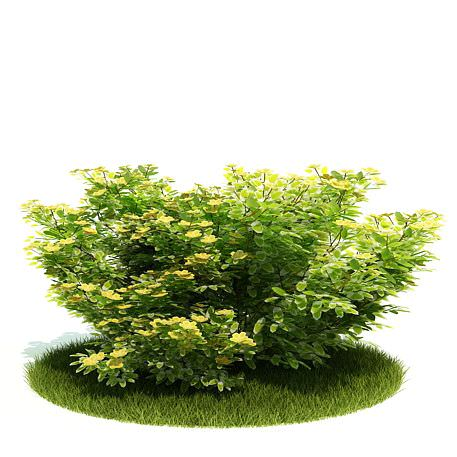 Planted Green Bush