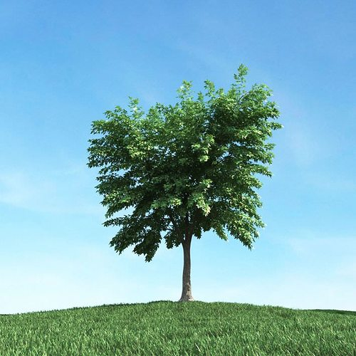 green leafed tree 3d model obj mtl 1