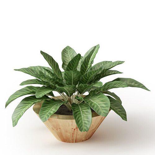 leafed potted plant 3d model obj mtl 1