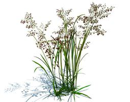 Green Grass With Flowers 3D model