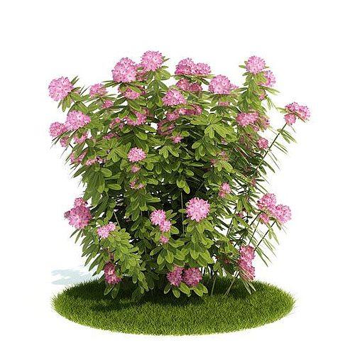 Pink flowering bush 3d cgtrader mightylinksfo