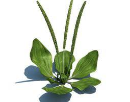 3D Green Aquatic Plant