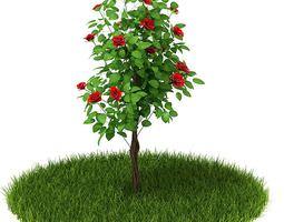 flowering rose tree 3d model