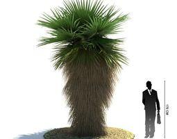 Green Palm Tree arecaceae 3D model