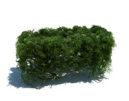3D model Green Piece Of Hedge