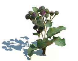 Green Leafed Plant 3D