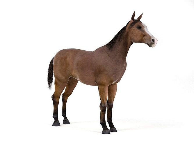 brown horse 3d model obj 1
