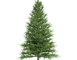 3D Conifer Tree