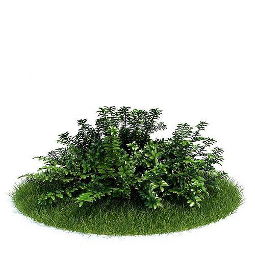 green bush 3d model  1