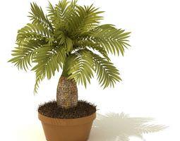 pot Potted Palm Tree 3D model