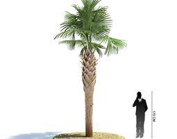3D Palm Tree Sabal Palmetto
