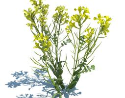 yellow wild flower 3d