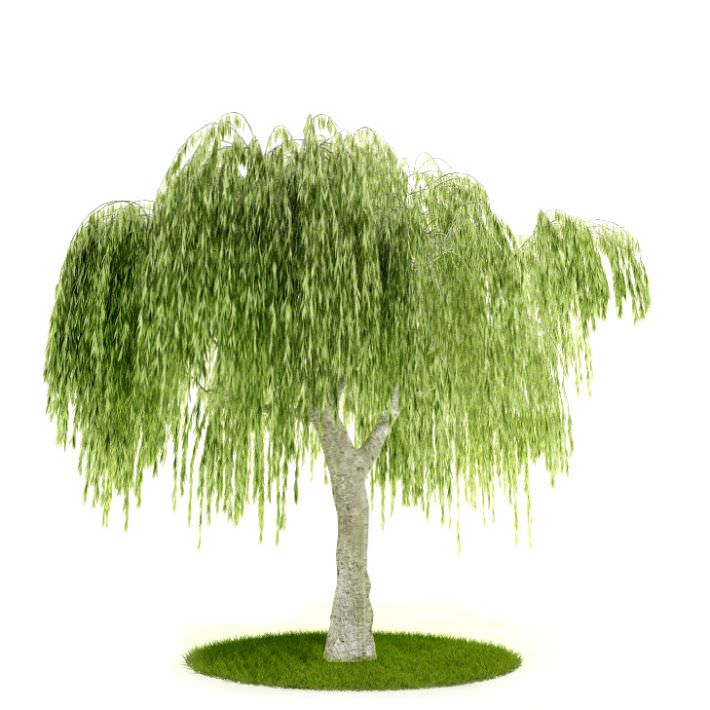 3d Model Tree With Hanging Leaves Cgtrader