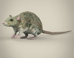 3D asset Game Ready Rat