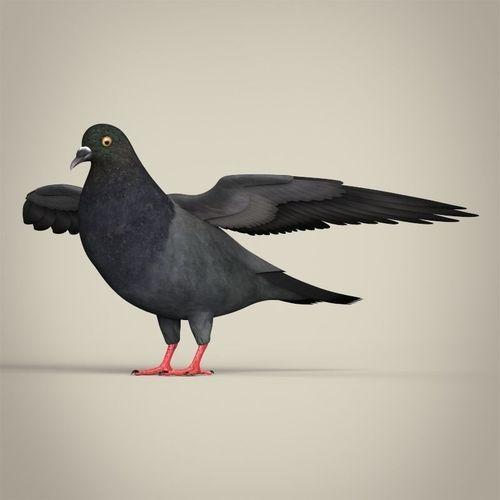 realistic pigeon 3d model low-poly max obj mtl 3ds fbx c4d lwo lw lws 1