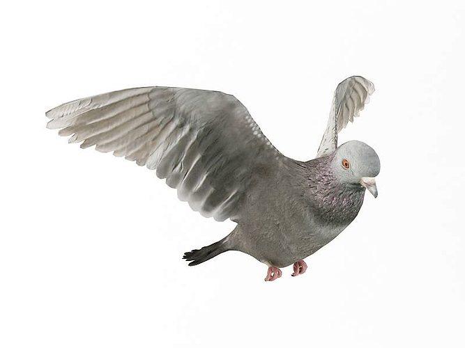 wings spread pigeon 3d model obj mtl 1