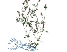 wild blooming plant 3d model