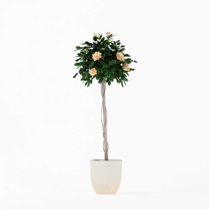 Flowering Tall Potted Plant 3D Model OBJ | CGTrader.com