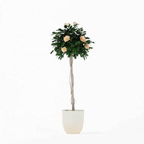 Charmant Flowering Tall Potted Plant 3D Model